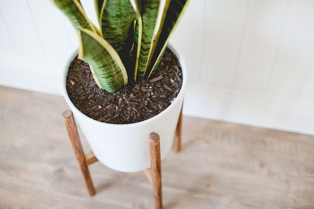 New Strong Pine Wood Modern Plant Stand Hand Made In India Home