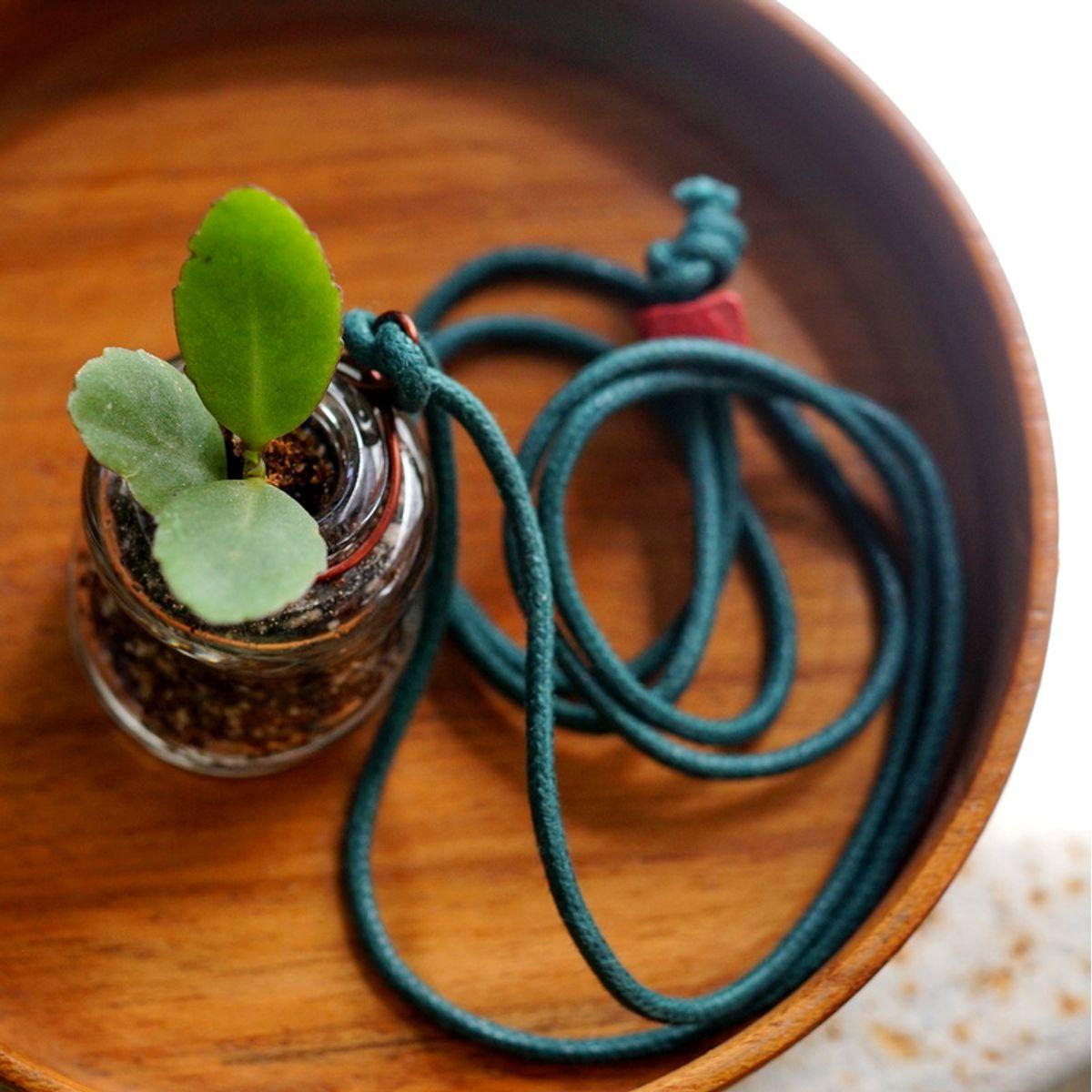 Wonky Bottle Locket - Planter - Clear
