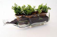 Glass Bottle Planter